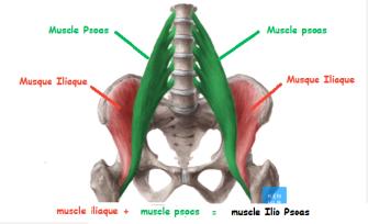 yoga muscle ilio psoqs